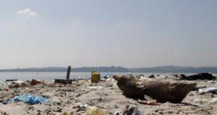 les eaux polluées du Brésil