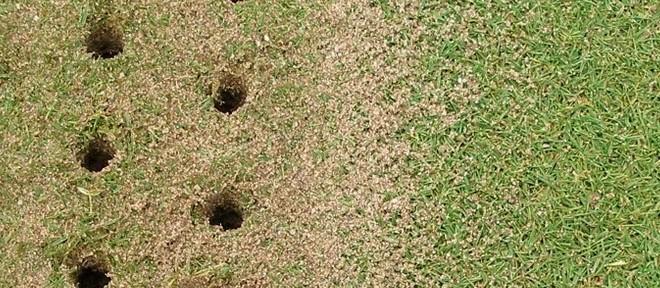 résultat dune aération des greens